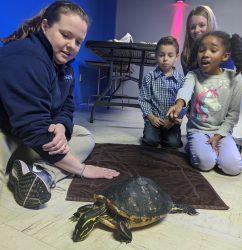 Animal Tales: Turtles